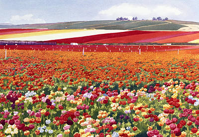 Flower Fields Painting - Ranunculi In Carlsbad by Mary Helmreich