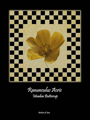 Digital Art - Ranunculus Buttercup Wild Flower Poster 1 by Barbara St Jean
