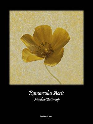 Digital Art - Ranunculus Buttercup Wild Flower Poster 2 by Barbara St Jean