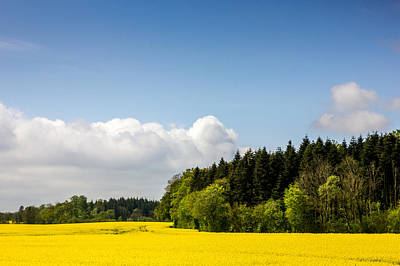Agronomy Photograph - Rape Field And Forest by Pati Photography