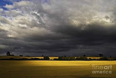 Pasture Scenes Photograph - Rapefield Under Dark Sky by Heiko Koehrer-Wagner
