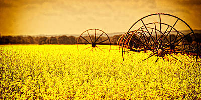 Rapeseed Farm In Bloom Art Print