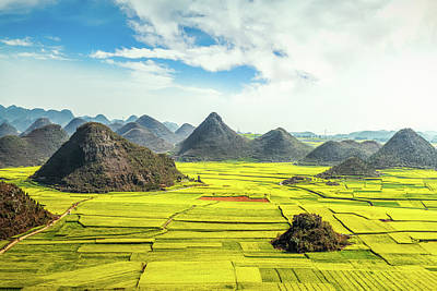 Photograph - Rapeseed Flower Fields In China by Shan.shihan