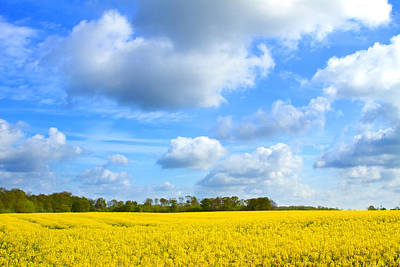 Photograph - rapeseed oil field in the English countryside by Fizzy Image
