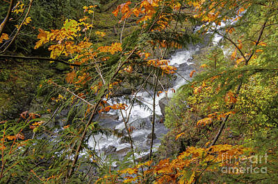 Rapids Through The Autumn Art Print by Darleen Stry