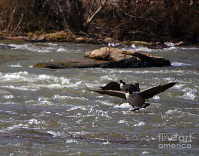 Photograph - Rappahannock Flight by Leslie Cruz