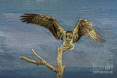 Osprey Florida Photograph - Raptor Display by Deborah Benoit