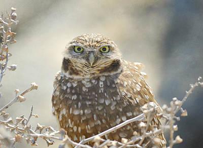Photograph - Raptor Stare by Fraida Gutovich