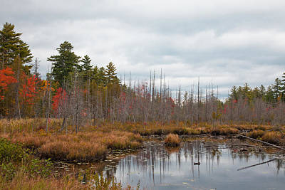 Photograph - Raquette Lake's Browns Track Inlet by David Patterson