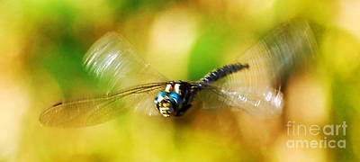 Photograph - Rare Dragonfly With A Face Art Prints by Valerie Garner