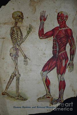 Human Skeleton Photograph - Rare Medical Illustration 1 Of 4 by Paul Ward