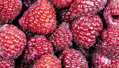 Photograph - Raspberries by John Crothers