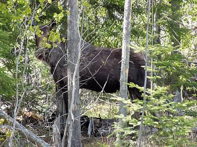 Photograph - Raspberry Moose by Gene Cyr