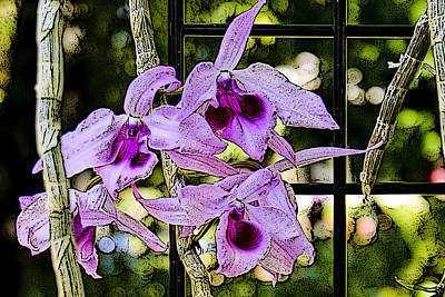 Photograph - Raspberry Orchids by Jonah Gibson