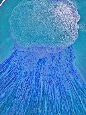 Bob Marley Abstract Painting - Rasta Mama Blues by Richard Sean Manning