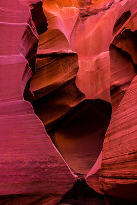 Red Photograph - Rattlesnake Heart by Chad Dutson