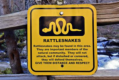 Rattlesnakes Art Print by Susan Leggett