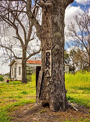 Okra Photograph - Ravaged By Katrina by Steve Harrington