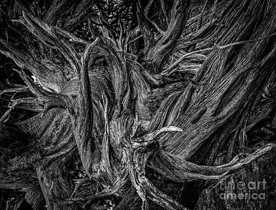 Photograph - Ravages Of Time II by David Waldrop