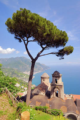 Photograph - Ravello Pine by Alan Toepfer