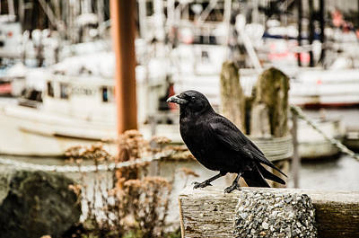 Photograph - Raven Ucluelet  by Roxy Hurtubise