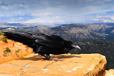 Photograph - Raven Bryce Canyon by Donald Fink