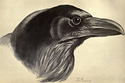 Raven Bird Drawing - Raven by Philip Ralley