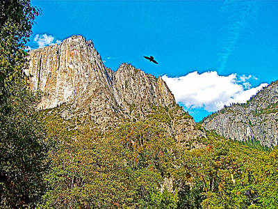 Raven Flying Over Yosemite Valley Photograph - Raven Flying Over Yosemite Valley In Yosemite National Park-california  by Ruth Hager