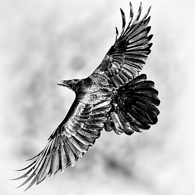 Photograph - Raven Of Death Valley by Tomasz Dziubinski