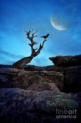 Moonlit Night Photograph - Raven On Twisted Tree With Moon by Jill Battaglia