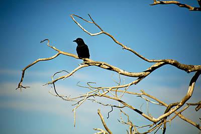 Overseer Photograph - Raven Overseer by Marilyn Hunt