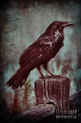 Photograph - Raven Perched On A Post by Jill Battaglia