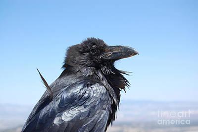 Photograph - Raven Profile by Debra Thompson