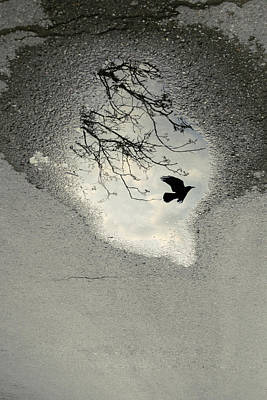 Puddle Photograph - Raven Reflection by Cambion Art
