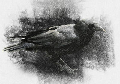 Poe Drawing - Raven by Taylan Apukovska
