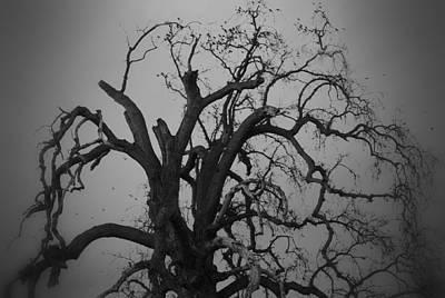 Raven Tree Art Print