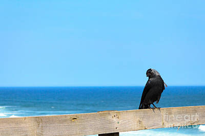 Photograph - Raven Watching by Peta Thames