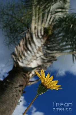 Digital Art - Ravenala Madagascariensis - Traveller's Palm by Sharon Mau