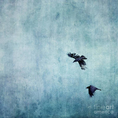 Blue Photograph - Ravens Flight by Priska Wettstein