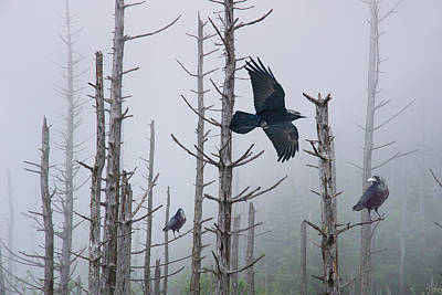 Ravens Of The Mist Art Print by Randall Nyhof
