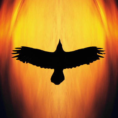 Raven Photograph - Raven's Spirit by Ron Day