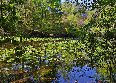 Deep Blue Photograph - Ravine Gardens - A Different Look At Florida by Christine Till