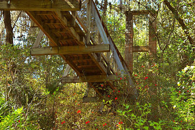 Tropical Scene Photograph - Ravine State Gardens Palatka Florida by Christine Till