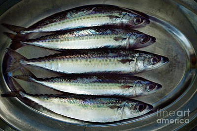 Fish Food Photograph - Raw Fish by Mythja  Photography