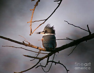 Ray Of Light On Kingfisher Art Print by Robert Frederick