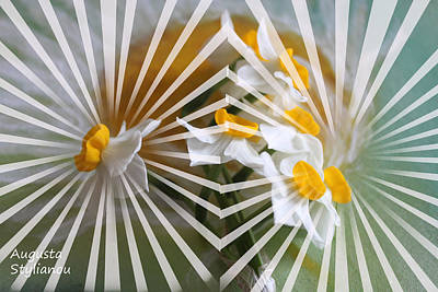Rays And Flowers Art Print