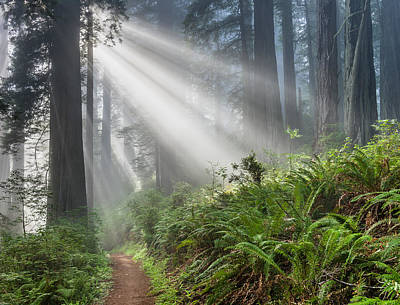 Photograph - Rays And Redwoods 2 by Greg Nyquist