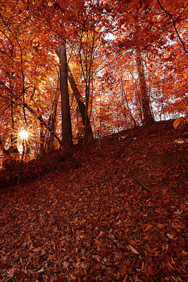 Reds Of Autumn Photograph - Rays Of Leaves by Lourry Legarde