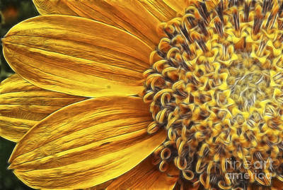 Beve Brown-clark Photograph - Rays Of Sunshine by Beve Brown-Clark Photography