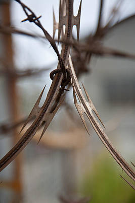Photograph - Razor Wire by Peter Tellone